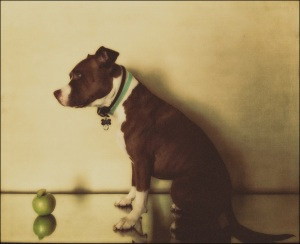 Dog with Apple